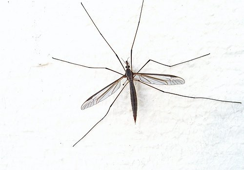Mosquito Sample Tests Positive for West Nile Virus in West