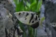 Archer Fish Exhibit - Long Island Aquariumlong Aquarium