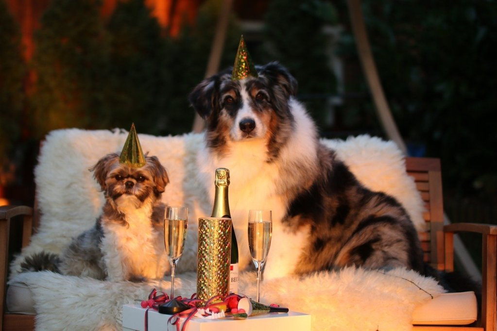 Dog-Friendly Party