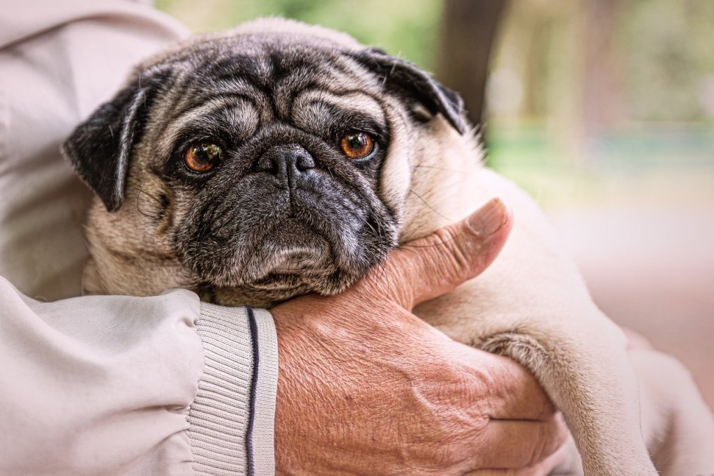Stroke – Your Dog's Chances Of Recovering From A Stroke