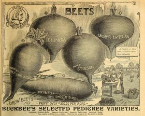 H.W. Buckbee seed and plant guide 1900.
