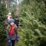 Long Island Christmas Tree Farm Guide 2016