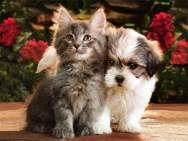 Image result for Valentine puppy and kitten