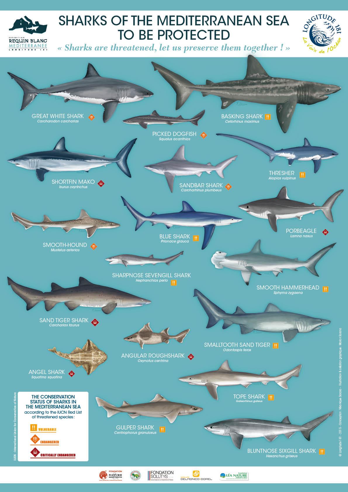 Programme Requins Et Raies
