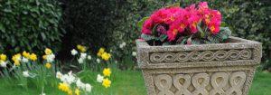 care; nursing home; residential care home; caterham; surrey; croydon; redhill; reigate