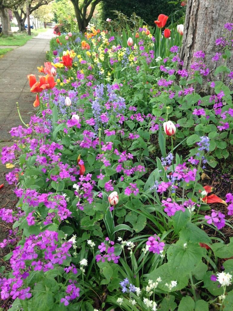 Spring flowers Seattle