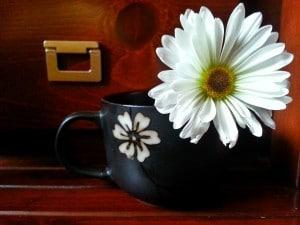 daisycup