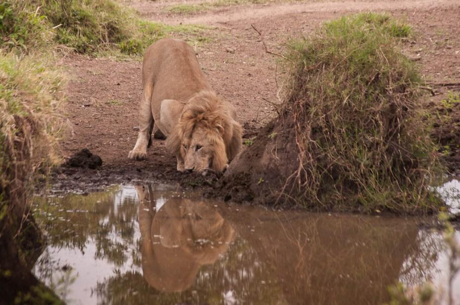 Safari-in-Kenya-42