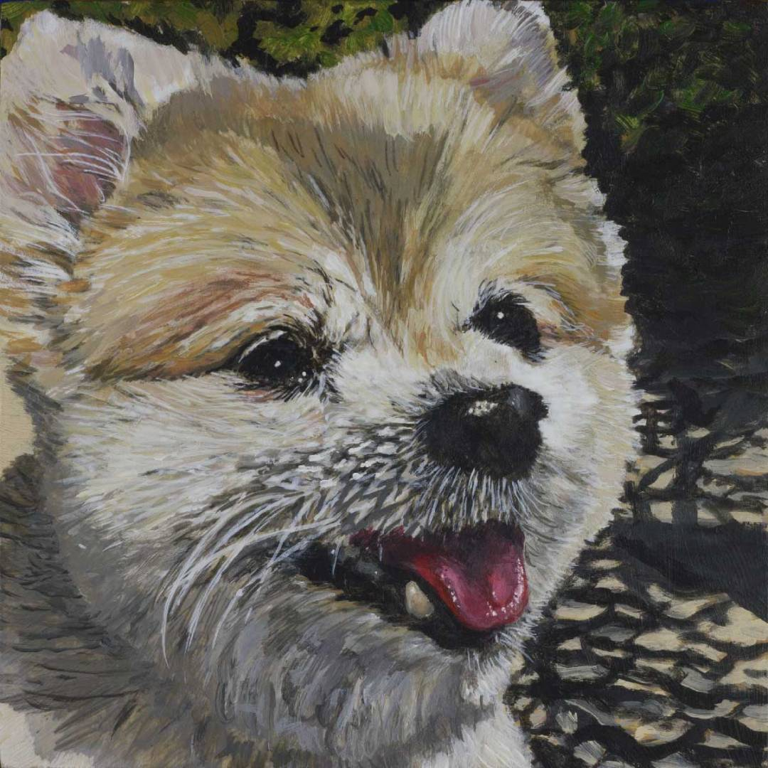 "small pet portrait by Steve Miller titled, ""Zoe"", completed October, 2018"