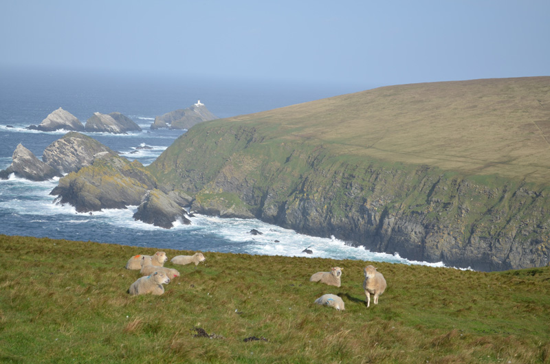 On finding peace…..Hermaness Nature Reserve, the Shetland Islands