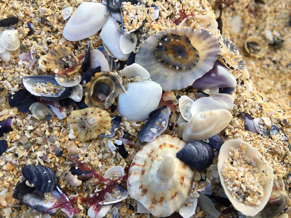 Ting Shells on Traigh-Iar-Beach, Isle of Harris