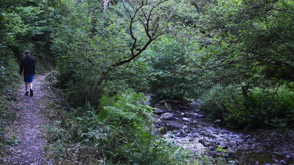 Horner Wood Exmoor