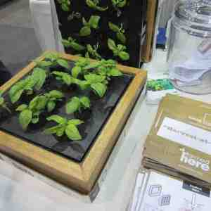 Hydroponic Systems For Home Gardening