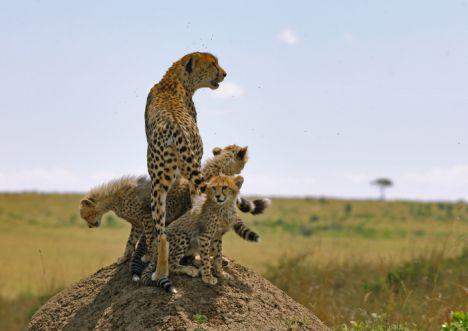 Szene aus Serengeti