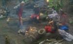 Dschungelcamp 2012: Es wird nass! - TV