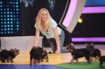 Martin Rütter - Die große Hundeshow mit Sonya Kraus, Dunja Hayali, Atze Schröder und Joachim Llambi - TV