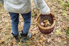Normas para la recogida de setas en terrenos forestales