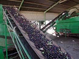 Atención olivareros,un nuevo documento sustituye el guía conduce