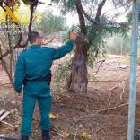 La Guardia Civil sanciona por criar animales silvestres