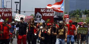 puertorico-transgenicos-loquesomos