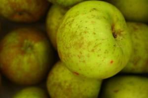 Manzana-Reineta-LoQueSomos