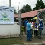 Colombia. Las contradicciones de 'Caucannabis'