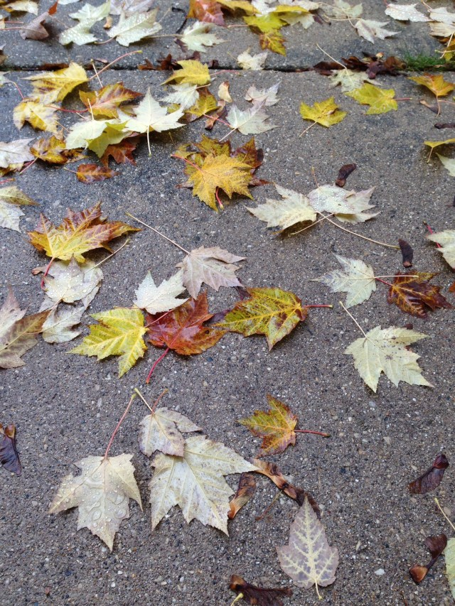 leaves on pavement3