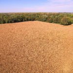 cornfield-selling-indiana-farm-shelby-county-farm-auction