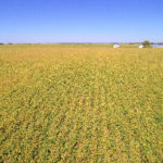 woodard-trust-illinois-farm-auction-sale-agriculture-fields