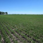 piatt-county-illinois-farm-land-auction_loranda-group