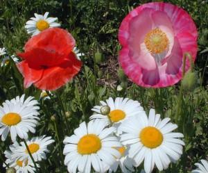 Wildflowers produce dark, rich honey