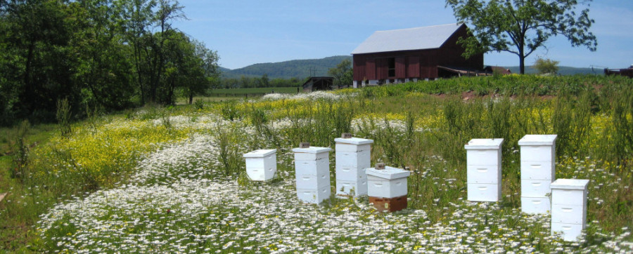 wildflowers, bee hives and countryside