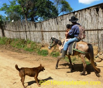 Although it´s difficult to tell what is happening here in San Antonio las Flores, Sumpango, the raised hair on the dogs back gives us an idea of the action.