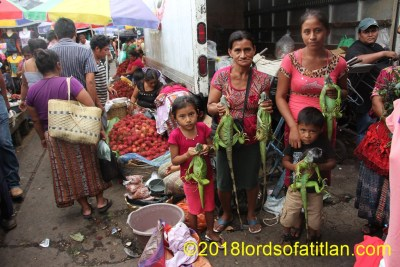 Family selling live iguana in Mazatenango. Although illegal, the sale of iguana both live and cooked is a daily event.
