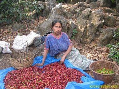 Ofelia of Porvenir, San Lucas Tolimán selecting coffee, finca Pampojilá