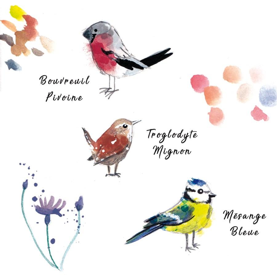 illustration espèces oiseaux aquarelle - dessin d'observation