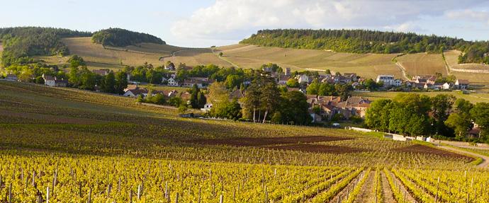 Bourgogne vine og klassifikationer