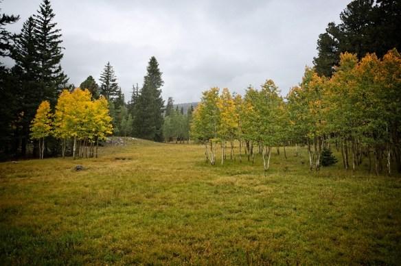 CampingMeadow