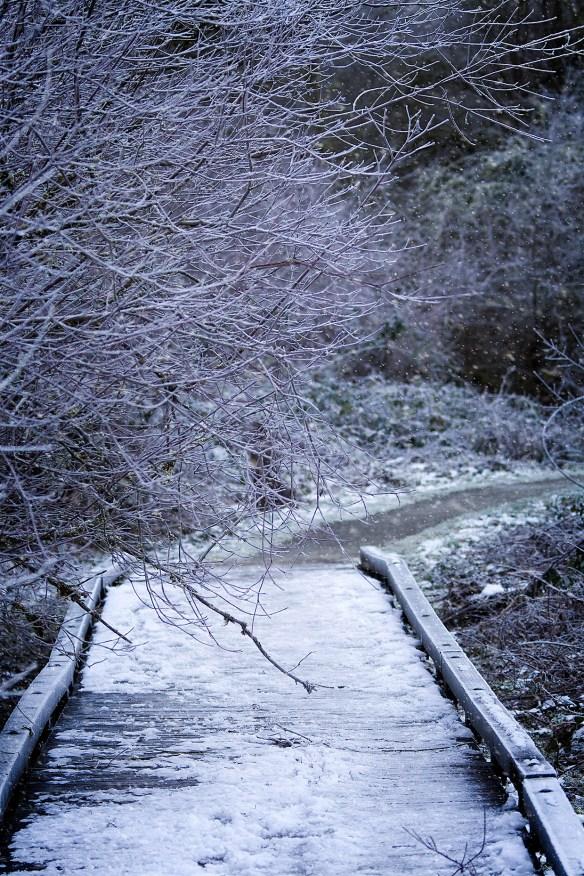 SnowyCrsng