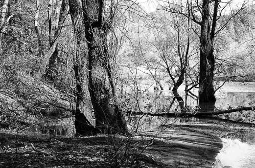 Alberi con il lago di Chiesanova sullo sfondo