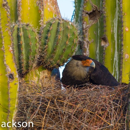 Photographing Nests