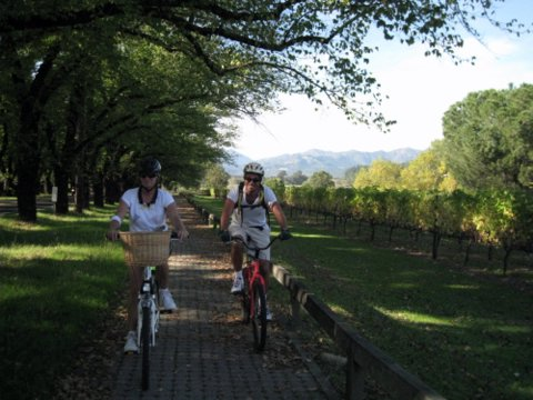 Biking through wine country