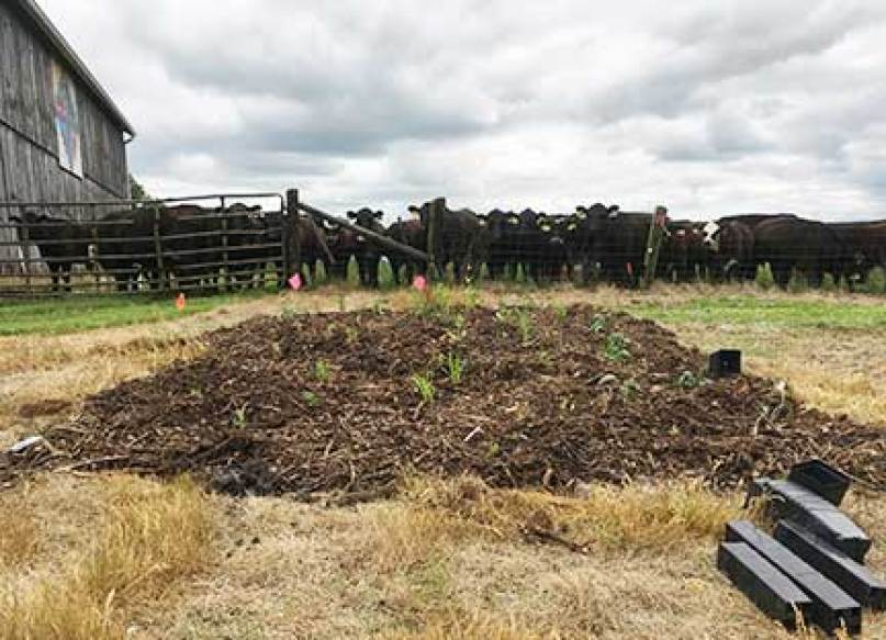 About 120 potted flowers of pollinator habitat were planted nearby where the Motherhouse cows graze.