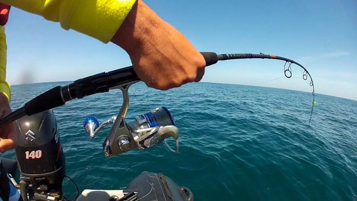 pêche au requin 2017