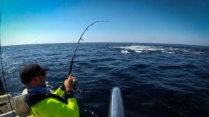 chasse de thon rouge