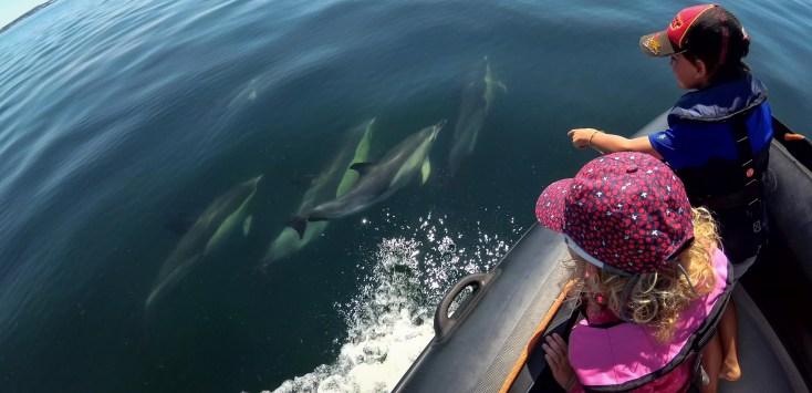 dauphins de l'ile de groix