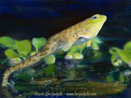 """Paintings by Lori Garfield : Leap Frog, 12"""" x 9"""" Original Oil Painting of a frog leaping on the water's surface of a lily pond by artist Lori Garfield, Medford Oregon"""