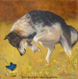 "Paintings by Lori Garfield : Pounce, 14"" x 14"" Original Oil Painting of a coyote pouncing on a brightblue butterfly with golden and amber hues in the background by artist Lori Garfield, Medford Oregon"