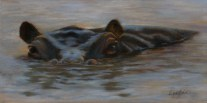 Paintings by Lori Garfield : River Horse, painting of a hippopotamus in water with eyes looking at the viewer. Original Oil Painting by artist Lori Garfield, Medford Oregon