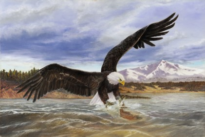 Paintings by Lori Garfield : Eagle Fisher, painting of a bald eagle fishing. Original Oil Painting by artist Lori Garfield, Medford Oregon